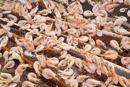 thinness: Dried shrimp - shrimp drying in the sun Stock Photo