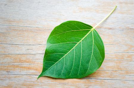 peepal tree: Sacred fig leaf (Ficus religiosa L. , Peepal Tree, Bodhi Tree, Bo tree, Peepal ) on wood background