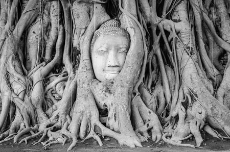 buddha face: black and white, Head of Buddha statue in the tree roots at Wat Mahathat temple, Ayutthaya, Thailand. Stock Photo
