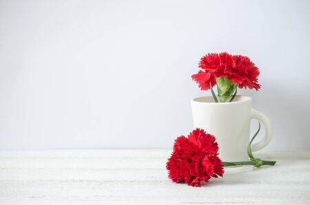 red  carnation: Still life with red Carnation flower on white painted wooden planks. Place for text.
