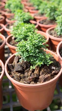 Roll of little plant in flowerpot photo