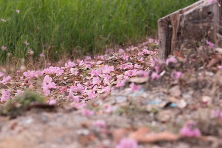 Pink flower fall in countryside Stock Photo