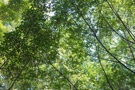Leaf of tree in garden Stock Photo
