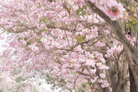 Buauty pink flower road
