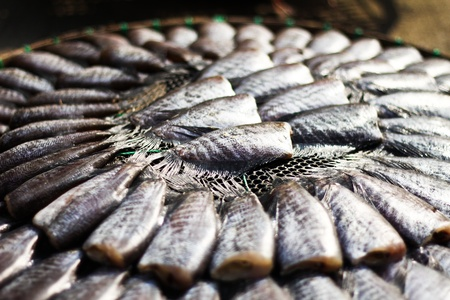 Salid Fish are dried in the sun. Stock Photo - 12002350