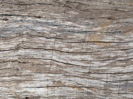 encogimiento: la textura de la madera podrida, fondo de la superficie de madera vieja