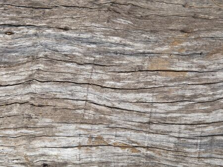 shrinkage: texture of decayed timber, old wood surface background Stock Photo