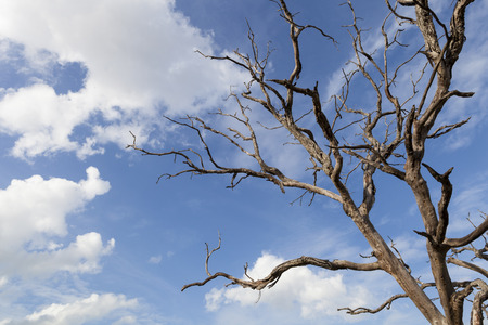 beautiful dead tree branches on fresh blue sky background