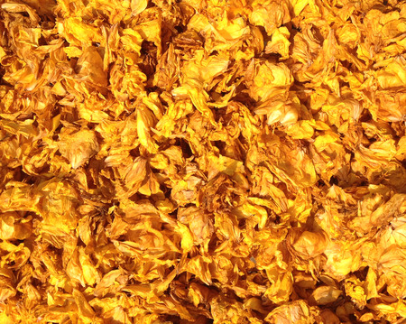 Dried yellow flower petal under afternoon sunlight