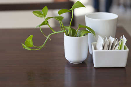 coffee up,sugar packets on breakfast table with green plant