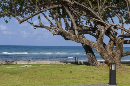beautiful tree in the garden beside the beach
