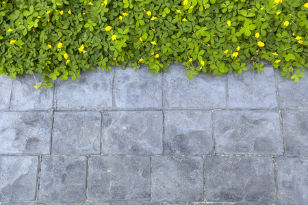 green plant beside stone path walkway background, beautiful eco wallpaper or presentation template