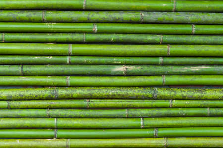 fresh bamboo make for moutain hut on northern thailand photo