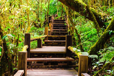 Wood bridge in a tropical rainforest, wet raining ans a lot of moss photo