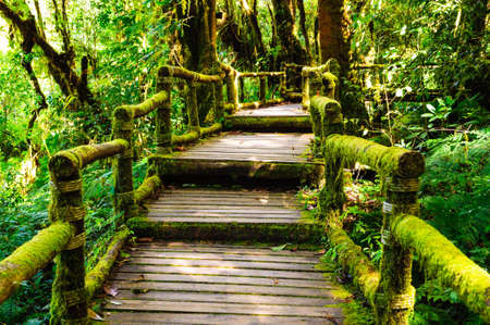 hand rail: The doi inthanon national park, a lot fo moss on hand rail the bridge Stock Photo