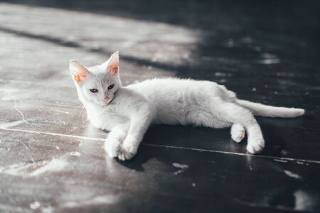 pity: cat kitty little soft white background relax