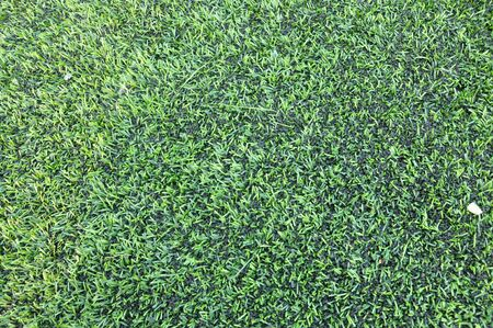 Artificial turf Stock Photo - 13381456