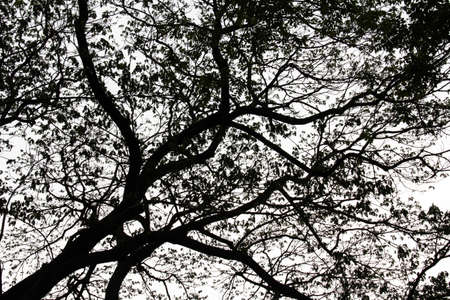 directly below: Branch of tree Black and white