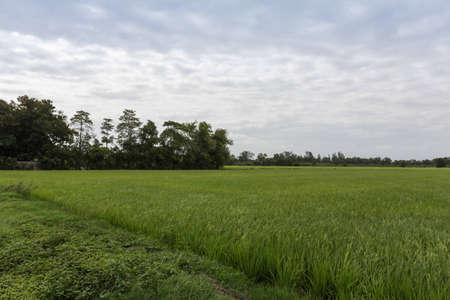 Rice field in rural of Thailand photo