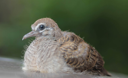 undeveloped: baby bird on surface Stock Photo