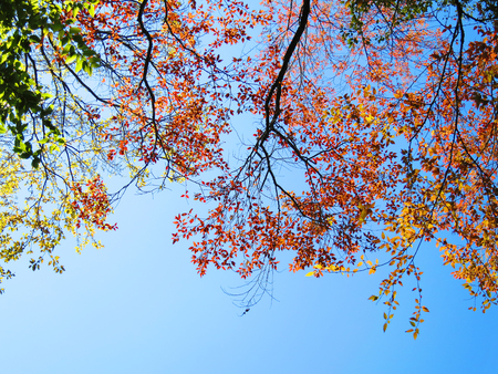 spring leaf: Beautiful spring leaf and branch on blue sky background