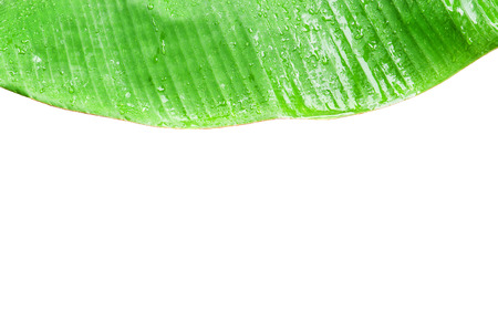 Closeup of green banana leaf with water drop use for background
