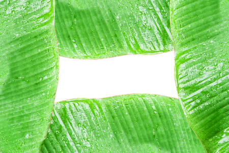Frame from green banana leaf with water drop use for background  Stock Photo