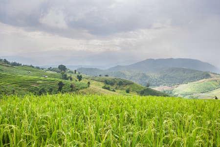 Beautiful green rice field terrace with rain cloud and mountain at Maejam, Chiangmai, Thailand. photo
