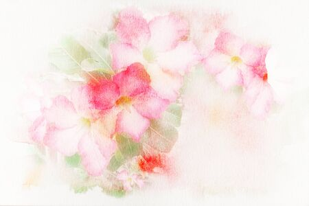 mock azalea: Abstract watercolor illustration of blossom pink flower Desert Rose Impala Lily Mock Azalea. Watercolor painting on paper. Floral watercolor illustration. Stock Photo