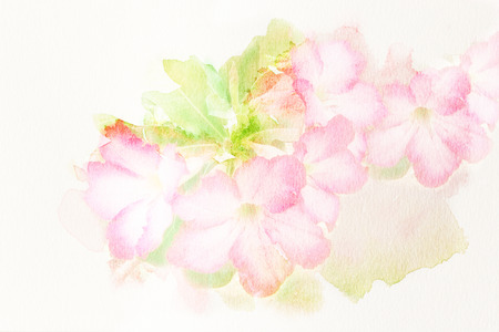 Abstract watercolor illustration of blossom pink flower Desert Rose Impala Lily Mock Azalea. Watercolor painting on paper. Floral watercolor illustration. 版權商用圖片