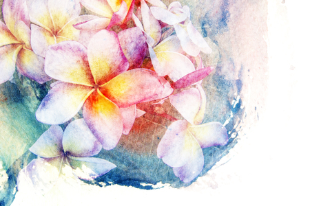 plumeria flower: Abstract watercolor illustration of blossom plumeria flower. Watercolor painting on paper. Floral watercolor illustration.