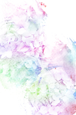 bouquet  flowers: Abstract watercolor illustration of blossom hydrangea flower. Watercolor painting on paper. Floral watercolor illustration. Stock Photo