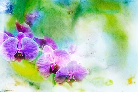 green flowers: Abstract watercolor illustration of blossom phalaenopsis orchid. Watercolor painting. Floral watercolor illustration.