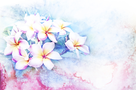 plumeria flower: Abstract watercolor illustration of blossom plumeria flower. Watercolor painting. Floral watercolor illustration.