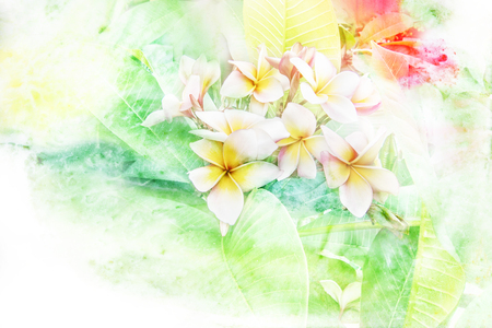 multiple stains: Abstract watercolor illustration of blossom plumeria flower. Watercolor painting. Floral watercolor illustration.