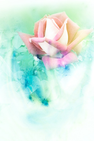 abstract wallpaper: Abstract watercolor illustration of blossom rose. Watercolor painting. Floral watercolor illustration.