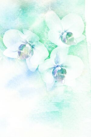 combining: Abstract watercolor illustration of blossom orchid. Watercolor painting. Floral watercolor illustration. Stock Photo