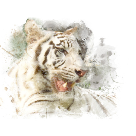 Closeup face of white bengal tiger. Watercolor painting (retouch).