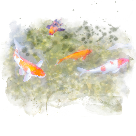 Colorful fancy carp swim in water. Watercolor painting (retouch).