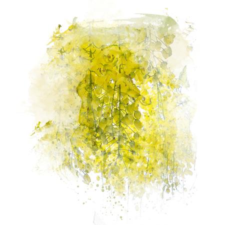 Golden shower flower (Cassia fistula). Watercolor painting (retouch). Stock Photo