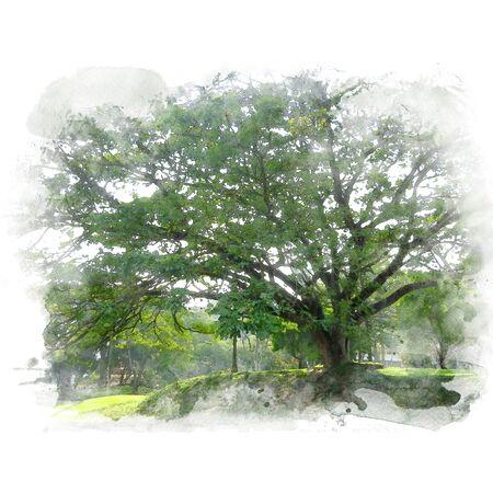 The giant green rain tree (East Indian walnut). Watercolor painting (retouch). Banco de Imagens