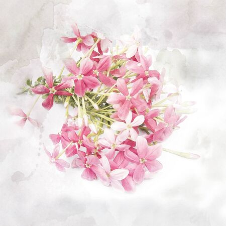 Illustration of blossom pink flower (Rangoon creeper). Watercolor painting (retouch). Stock Photo