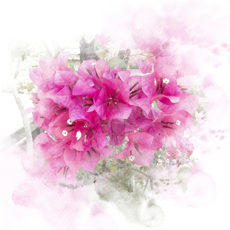 Illustration of blossom pink bougainvillea paper flower illustration of blossom pink bougainvillea paper flower watercolor painting retouch stock mightylinksfo
