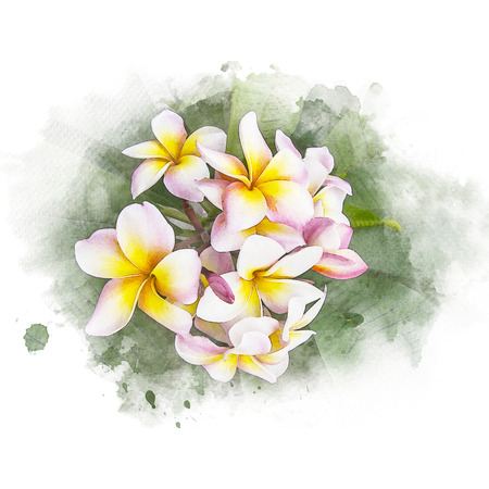 Illustration of blossom plumeria flower. Artistic floral abstract background. Watercolor painting (retouch). Stock Photo