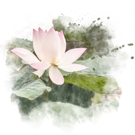 Watercolor painting (retouch) illustration of blossom pink lotus. Artistic floral abstract background.