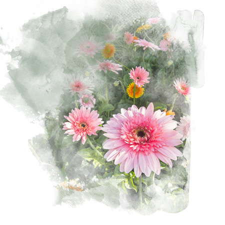 Illustration of blossom gerbera artistic floral abstract background. Watercolor painting (retouch). Banco de Imagens