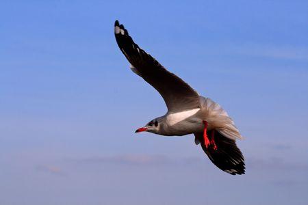 samutprakarn: Seagulls in Bangpu Samutprakarn Thailand  Stock Photo