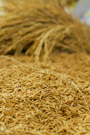 Mood shot of rice grain  Stock Photo