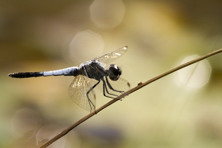 dragonfly on brown background photo