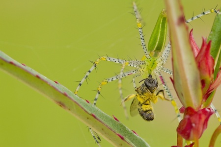 Become the food of bees, spiders. Stock Photo - 14342113